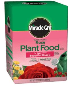engrais pour rosiers